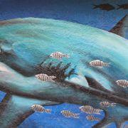 7.Fuchshai